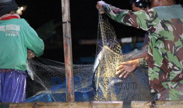 Dinas Kelautan dan Perikanan Klaim Tak Ada Kegiatan Ilegal Fishing di Gunungkidul 157