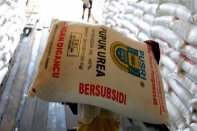Pengurangan Jumlah Kuota Pupuk Subsidi Tak Pengaruhi Petani di Gunungkidul 157
