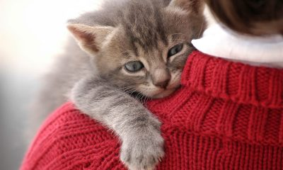 Enam Keuntungan Memelihara Kucing 390