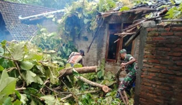 Hadapi La Nina, DLH Petakan Potensi Pohon Tumbang 157