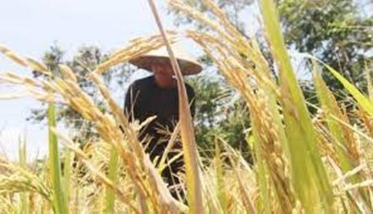 Irigasi Jadi Solusi Pertanian di Musim Kemarau 145