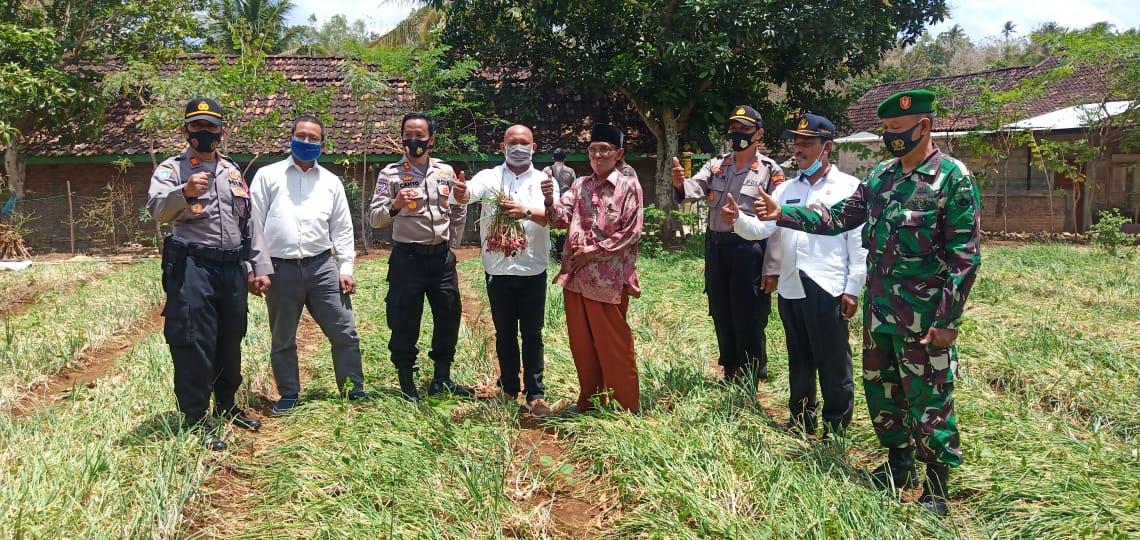 Jaga Ketahanan Pangan, Kalurahan Ngloro Dinobatkan Jadi Kampung Tangguh Nusantara 69