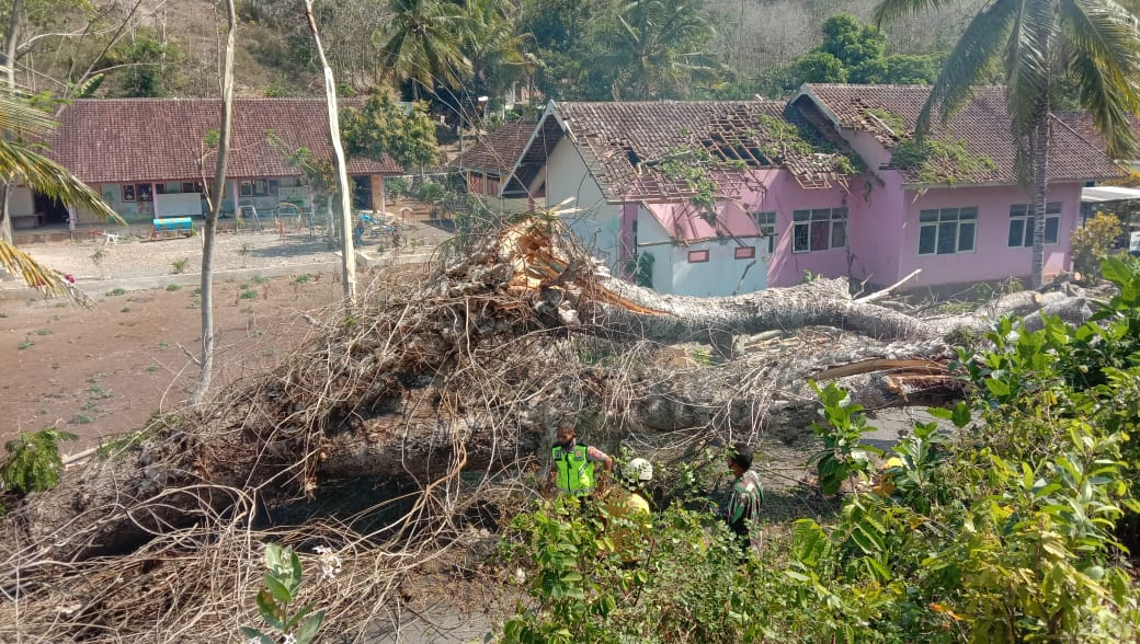 Pohon Tumbang Timpa Gedung TK, Kerugian Capai Puluhan Juta 69