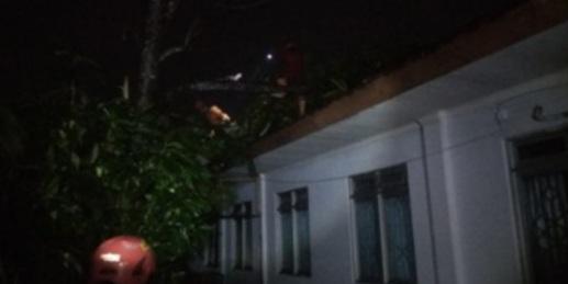 Dampak La Nina Meluas, Belasan Rumah di Patuk Rusak Akibat Pohon Tumbang 157