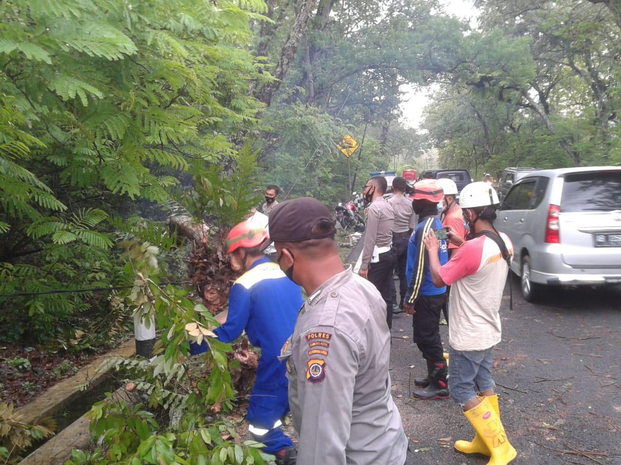 Tertimpa Pohon Tumbang di Tleseh, Sejumlah Pengguna Jalan Luka-luka 157