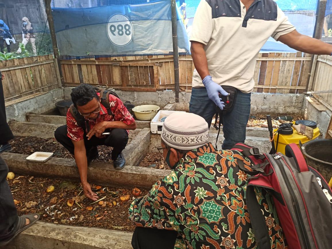 Kurangi Penumpukan Sampah Organik DLH Dorong Budidaya Maggot 157