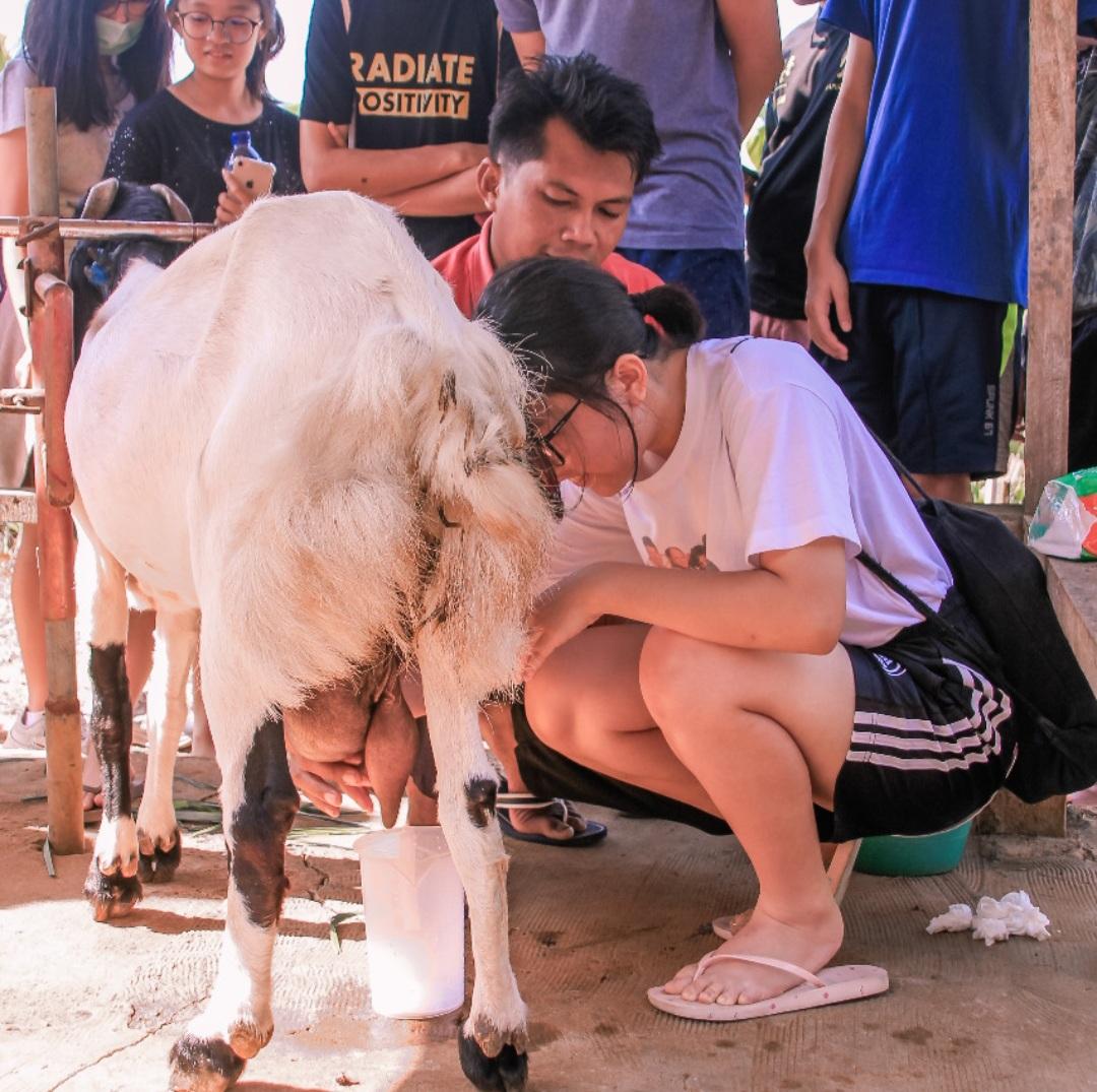 Menikmati Wisata Sambil Belajar Beternak Kambing Etawa Purbaya 157