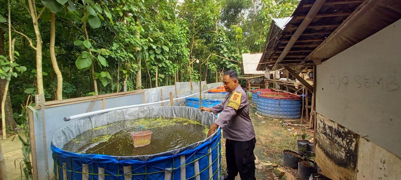Mengenal Bripka Mantoro, Bhabinkamtibmas yang Aktif Dampingi Warganya Budidaya Lele Organik 149