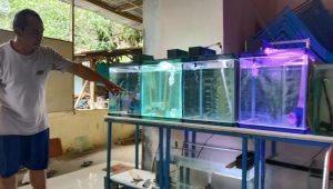 Budidaya Ikan Louhan, Solusi Bisnis Menguntungkan di Masa Pandemi 182