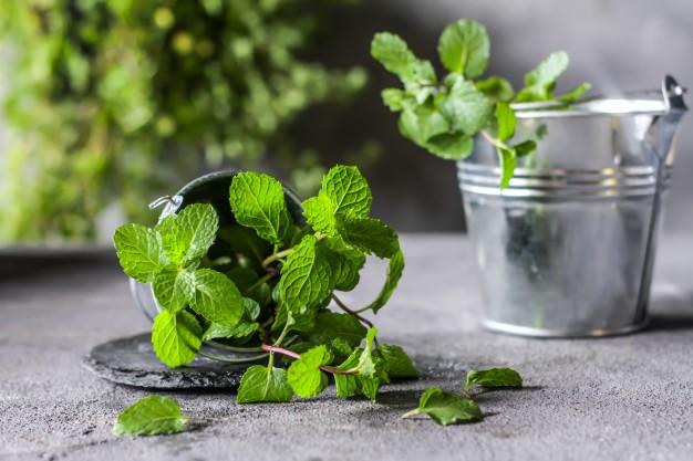 Enam Tanaman Herbal Sebagai Penghias Ruangan 157