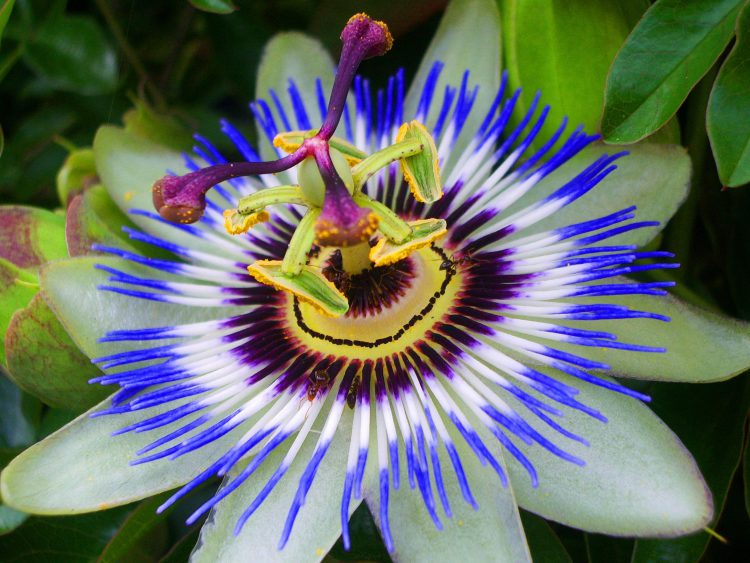 Enam Bunga Dengan Warna Unik 181