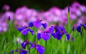 Enam Bunga Dengan Warna Unik 203