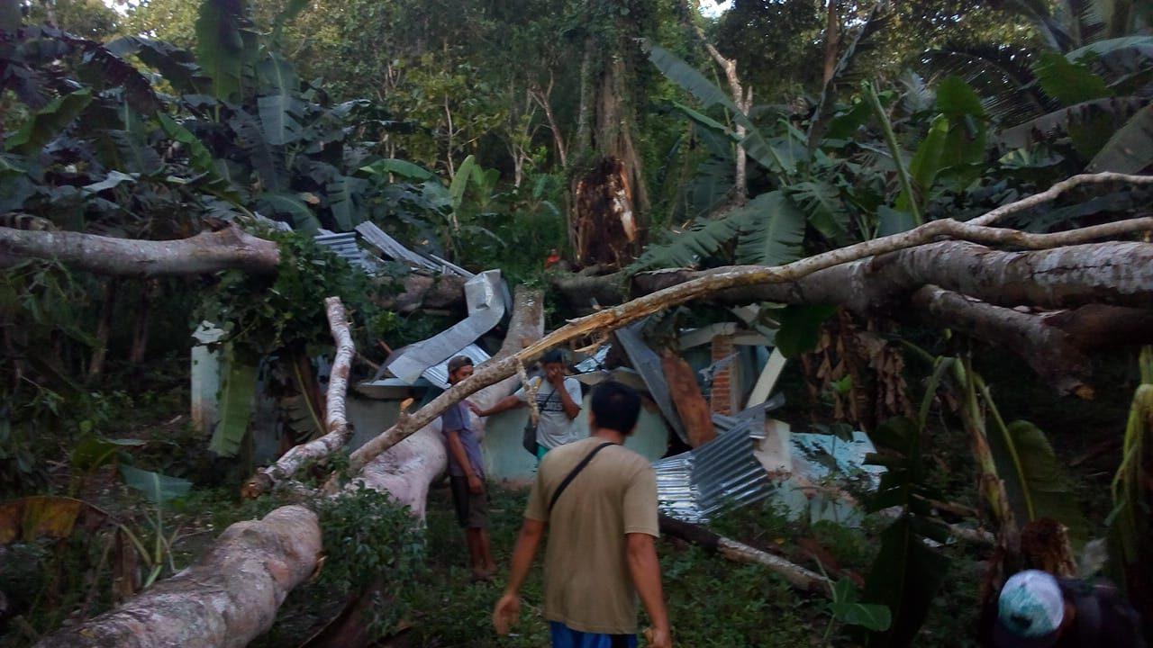 Tak Ada Angin dan Hujan, Pohon Beringin Berusia Ratusan Tahun Roboh Hancurkan Bangunan Pamsimas 157