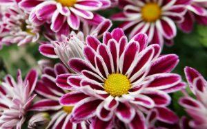 Enam Bunga Dengan Warna Unik 207