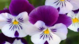 Enam Bunga Dengan Warna Unik 199